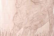 Sofia - Horse