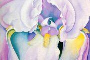 Georgia O'keeffe - Luce di iris - 1924